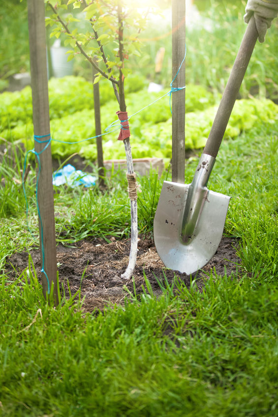 When Is The Best Time To Transplant Trees