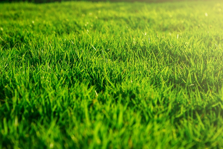 The idea is to grow a lawn with lush green picture-perfect grass.