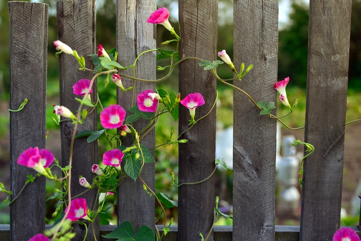 Make sure you choose a flowering vine species to give your landscape a romantic feel.