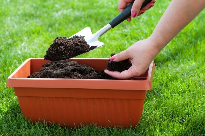 Test your soil for nutrient levels.