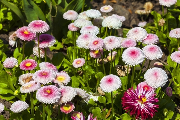 Adding blossoming shrubs, flowers and trees to your landscape will completely transform it.