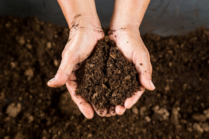 The soil will require a boost in terms of its fertility.