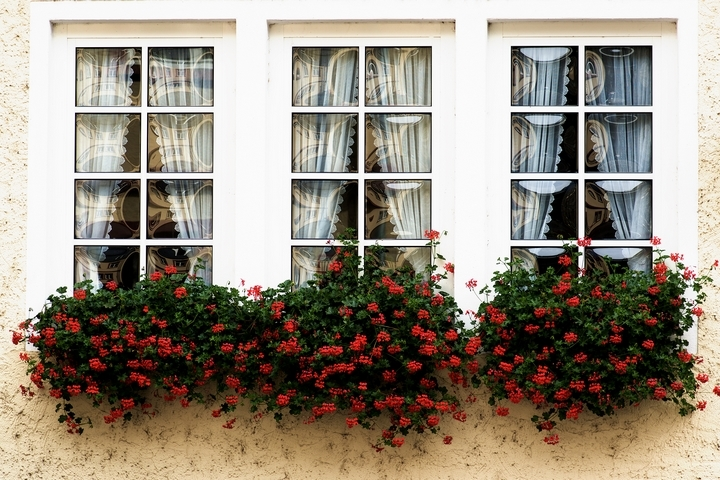 Bloom boxes are mostly placed outside windows.