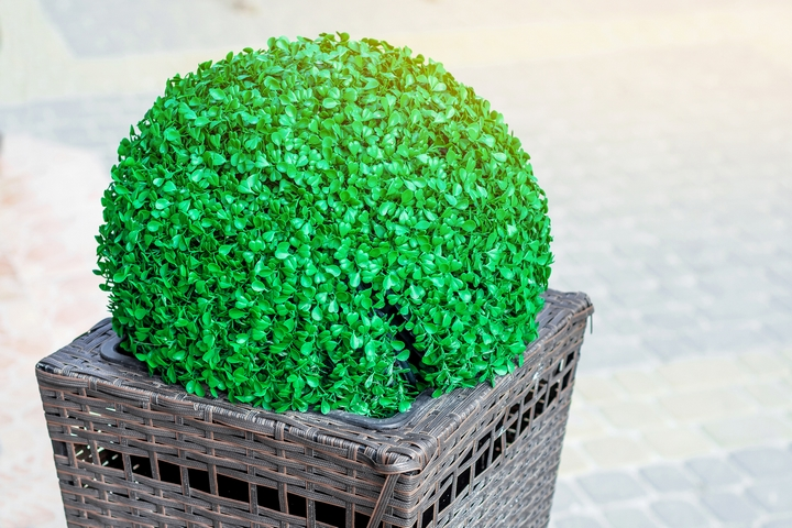 Potted topiaries will make your front yard landscaping look great.