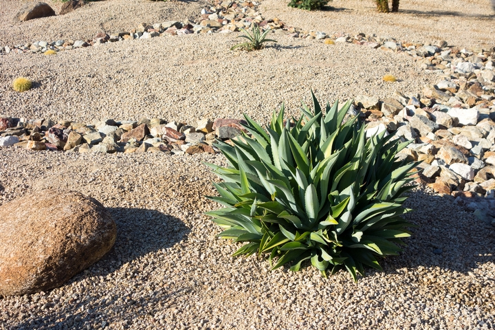 Xeriscaping can be great front yard landscaping ideas.